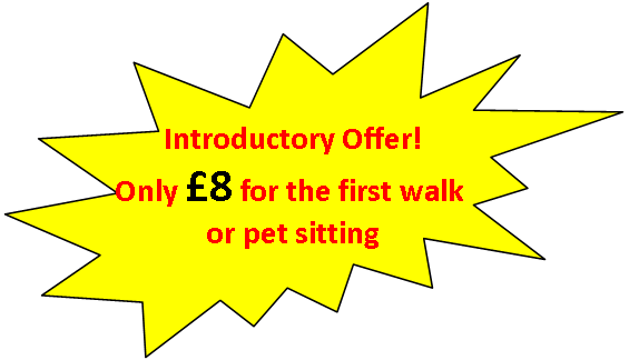 Introductory Offer graphic